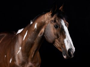 Retratos equestres. fotografia equestre por joao carlos.