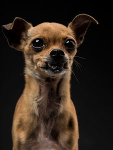 Fotografia de cão por joao carlos.