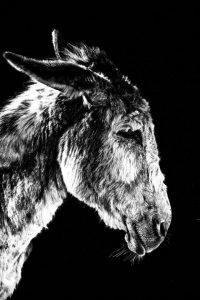 santuário de burros. fotografia equestre por joao carlos.