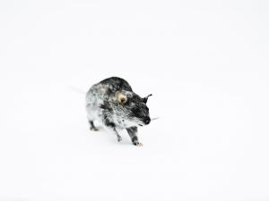 the house of deads. fotografia de animais.