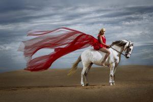 sandisk fotografia equestre por joao carlos.