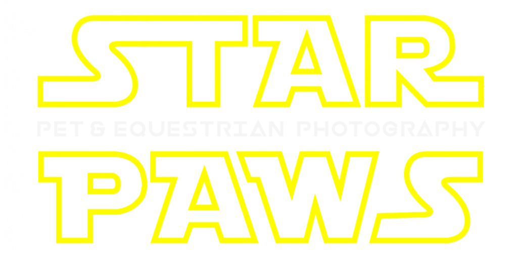 star-paws-photo-color-logo